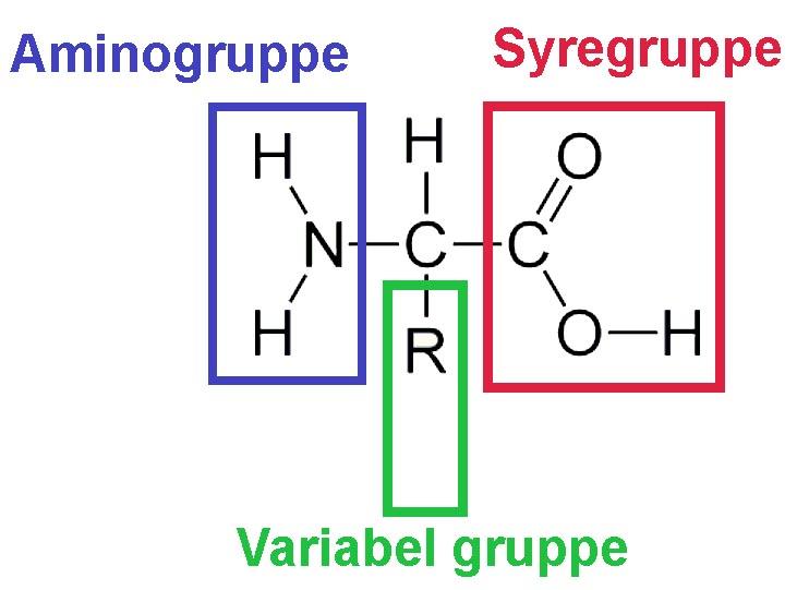 Aminosyre