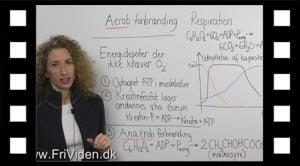 Biokemi aerob anerob