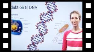 DNA i prokaryoter og eukaryoter