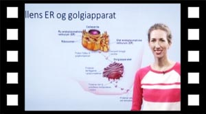 ER og golgiapparatet