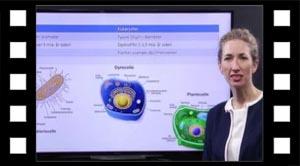 Procaryoter og Eukaryoter