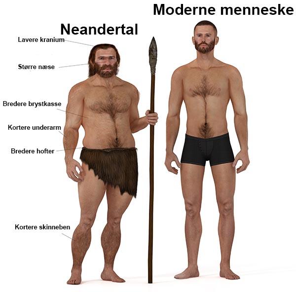 Neandertal og det moderne menneske