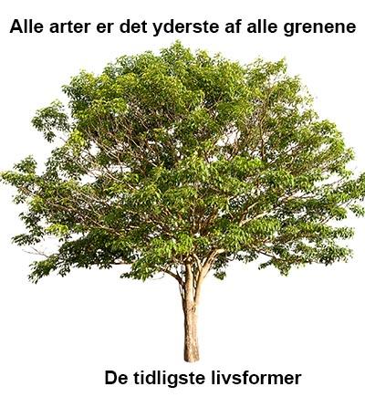 Stamtræ hvor alle arter kommer fra samme stamme