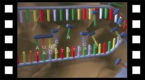 Video om proteinsyntesen.