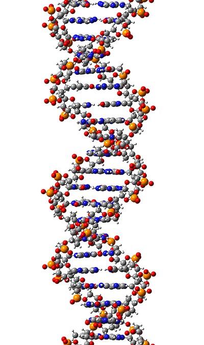 shutterstock_182654564 DNA
