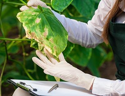 shutterstock_271571255 plante gener biotek