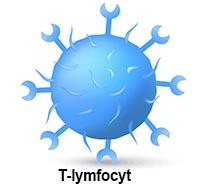 shutterstock_292723997 immun tcelle