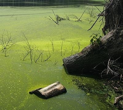 Alger kan være tegn på eutrofiering