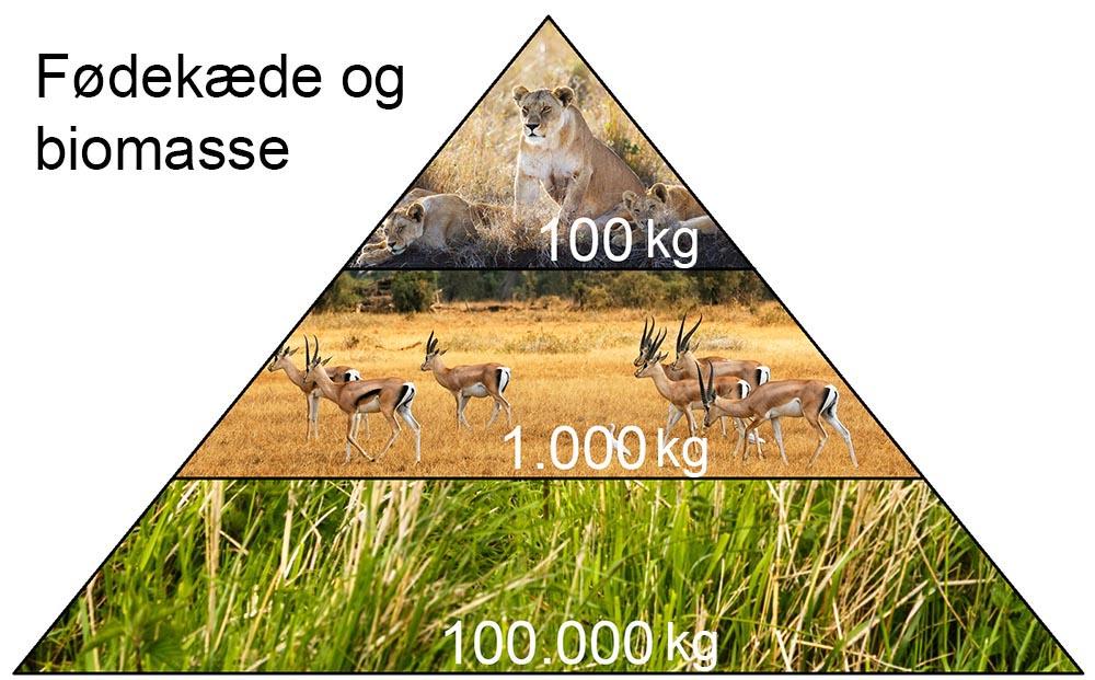 Fødekæde og biomasse