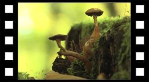 Levesteder Biodiversitet