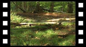 Levesteder skoven natursty