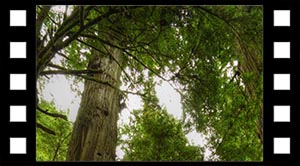Bæredygtigt træ