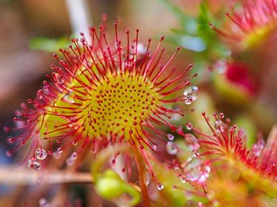 shutterstock_148553753 plante blomst 400px