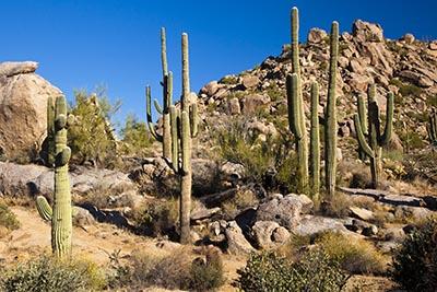 shutterstock_160270184 kaktus 400px