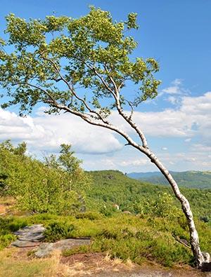 shutterstock_345886058 træ TreeWind