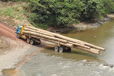 shutterstock_54257941 logging regnskov
