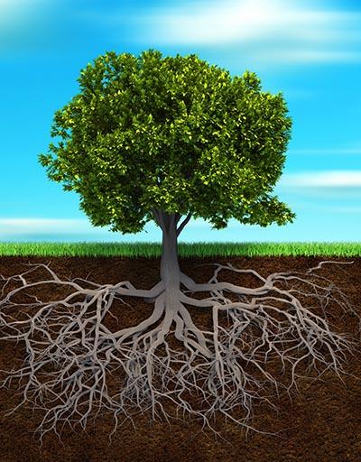 shutterstock_63001576 planter træ rødder