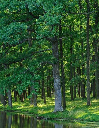 Skoven, et økosystem