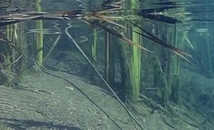 Biotopen, under vandet i skovsøen