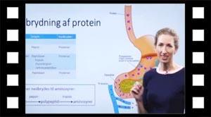 Nedbrydning af protein