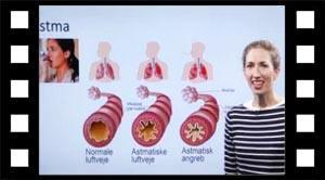 Hjerte lunger astma bright