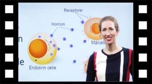 Hormoner 09 målcelle