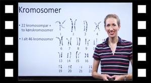 Kromosompar og kønskromosomer