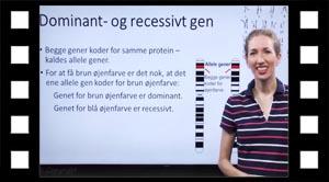 Allele gener, dominant- og recessivt gen