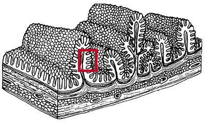 tarm6 med rød kasse 400px
